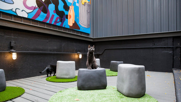 Koneko Cat Cafe NYC