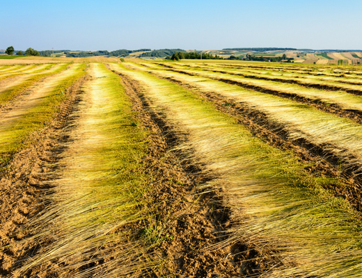 superior quality high quality