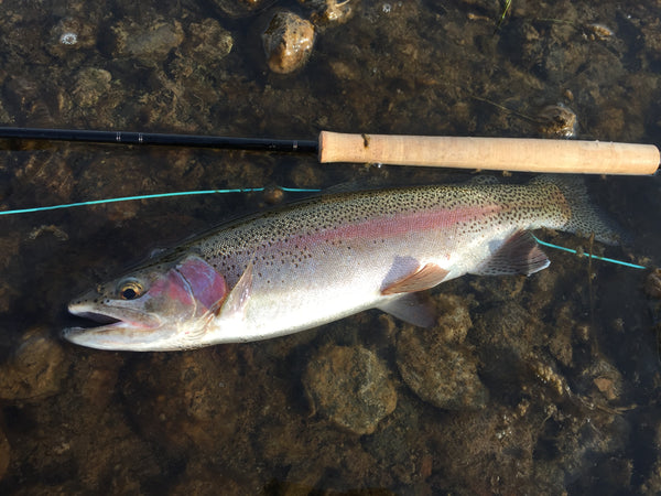 Madison River Outfitters Fishing Report 10/16/2017