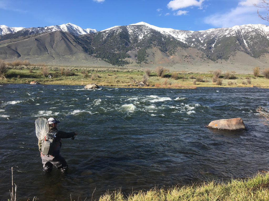 Madison River Outfitters Fly Fishing Report 5/16/2017