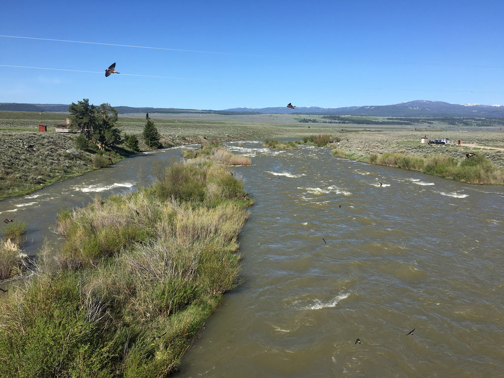 Madison River Outfitters Fishing Report 5/29/2018