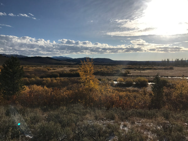 Madison River Outfitters Fishing Report 10/9/2017
