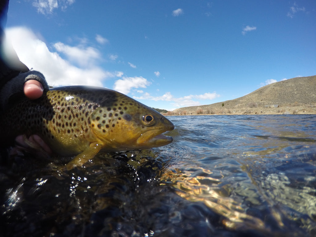 SW Montana Fly Fishing Report 4/19/2016