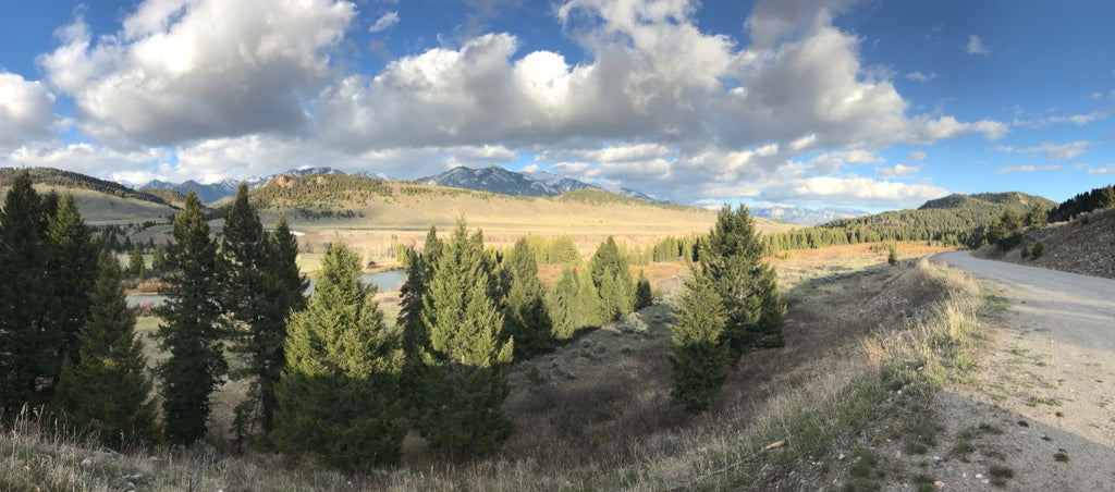 Madison River Fishing Report - May 26, 2020