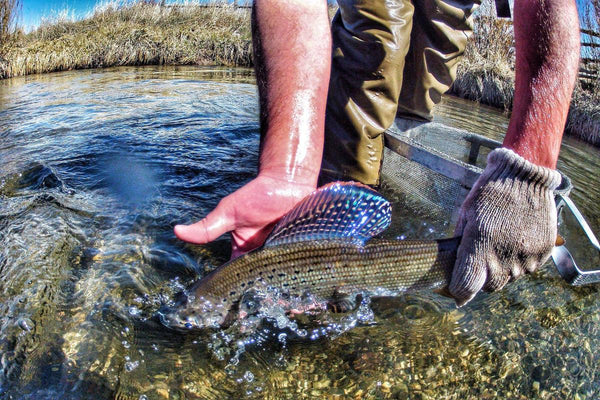 Agreements, fishing regulation changes on the docket for Centennial Valley grayling