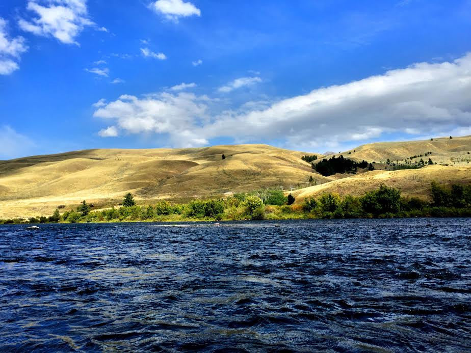 Madison River Fly Fishing Report 8/2/2016