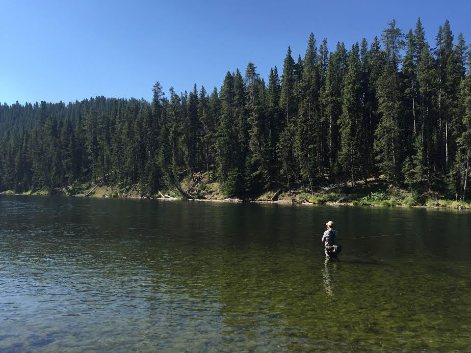 Fishing report madison river outfitters for Fly fishing yellowstone river