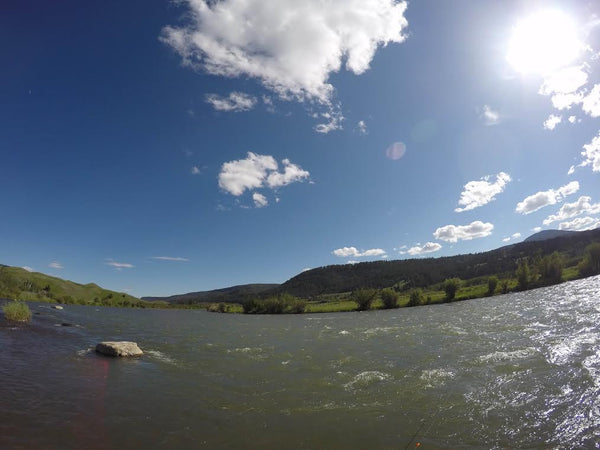 Madison river fly fishing report 6 19 2016 madison river for Upper madison fishing report