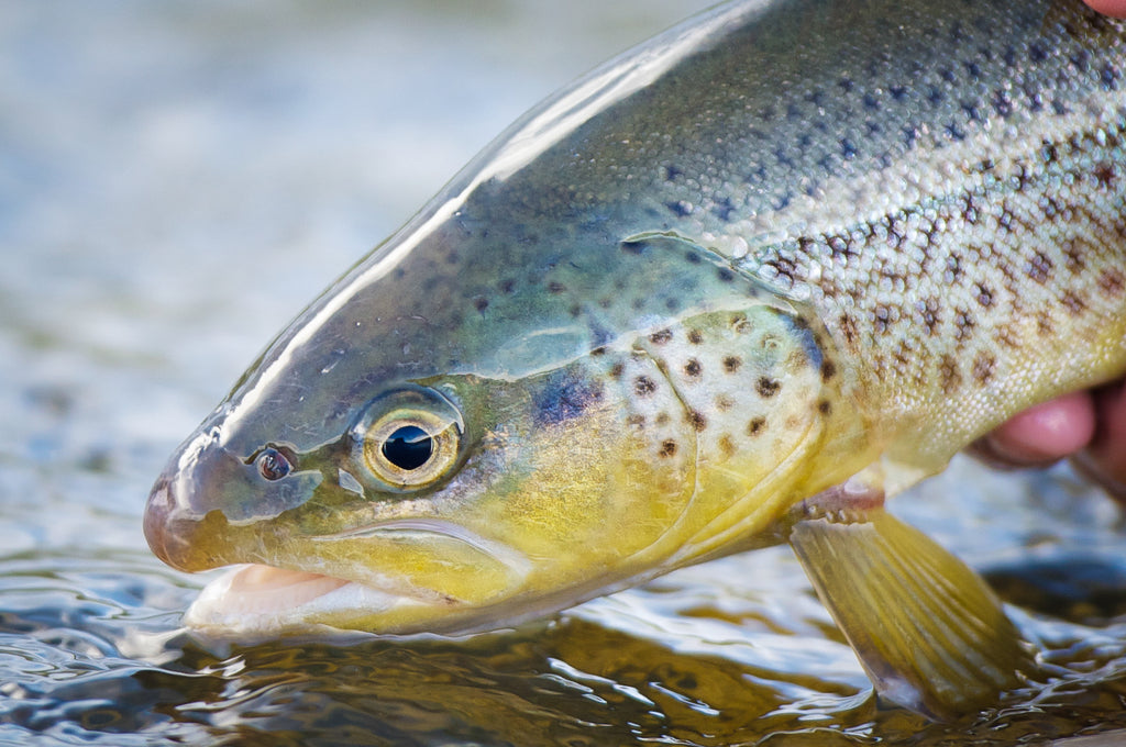 West Yellowstone Fly Fishing School - Instructional Guide Trips