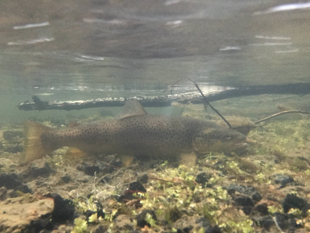 Madison Fly Fishing Report