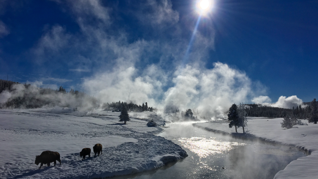 Bison by the Firehole River in winter