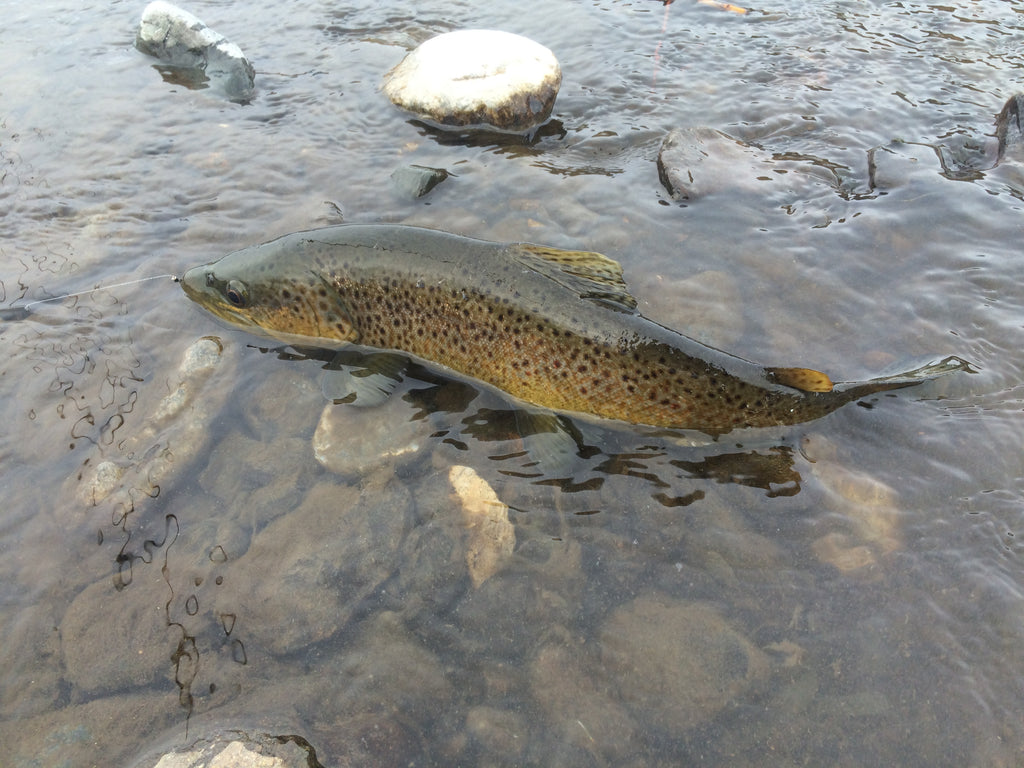 Madison river outfitters fishing report 12 05 2016 for Yellowstone park fishing report