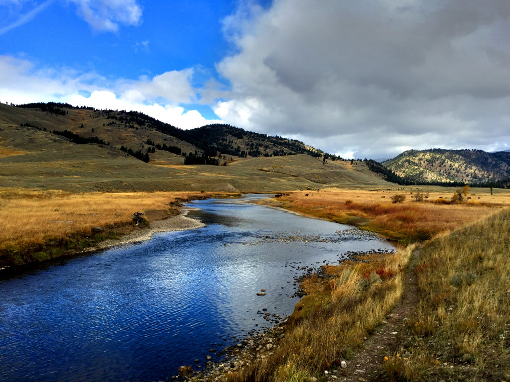 Yellowstone National Park Fly Fishing Reports