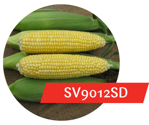 SV9012SD (RR, Bt) Sweet Corn