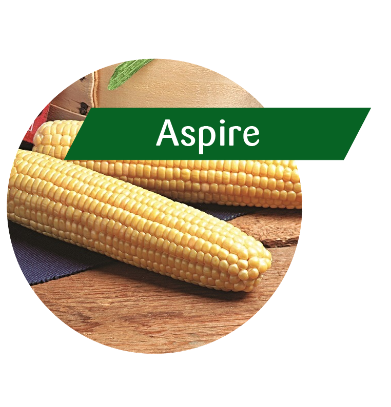 Aspire (GT(RR)/LL/Bt) Sweet Corn