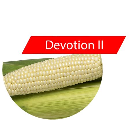 Devotion II (RR, Bt) Sweet Corn