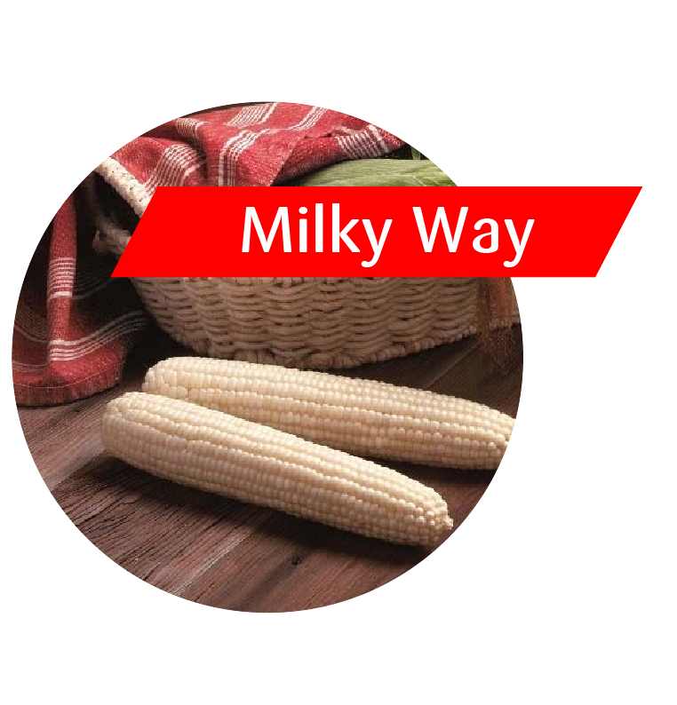 Milky Way (GT(RR)/LL/Bt) Sweet Corn