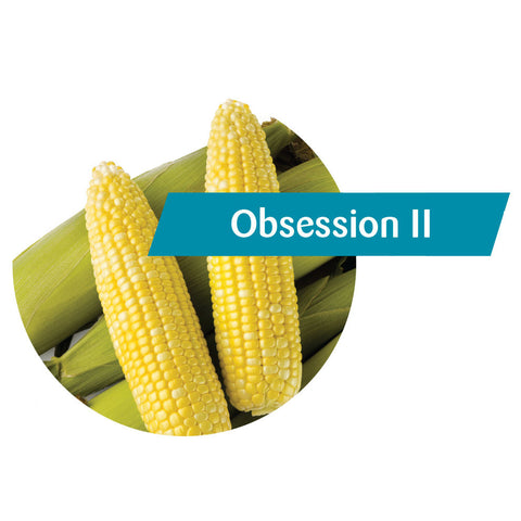 Obsession II (RR, Bt) Sweet Corn