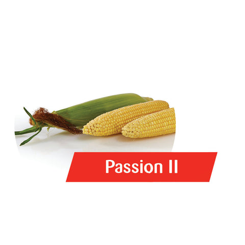 Passion II (RR, Bt) Sweet Corn