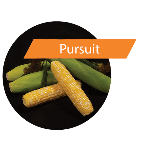 Pursuit (GT(RR)/LL/Bt) Sweet Corn