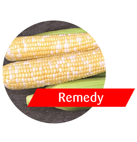 Remedy (GT(RR)/LL/Bt) Sweet Corn