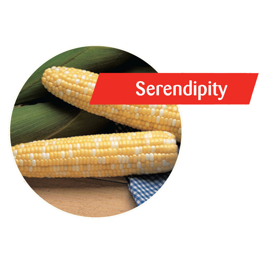 Serendipity Sweet Corn
