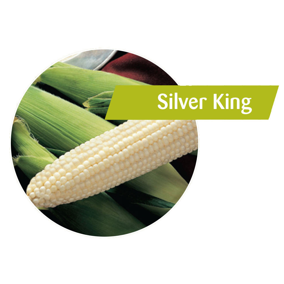 Silver King Sweet Corn