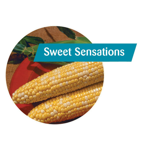 Sweet Sensations Sweet Corn