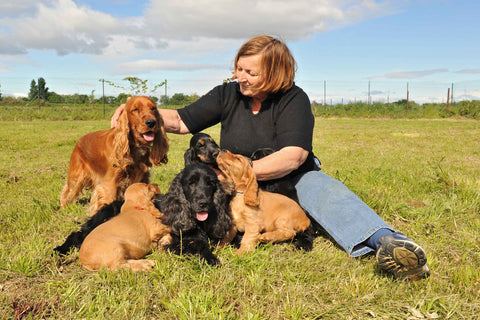 AKC Breeding Basics - Free Course