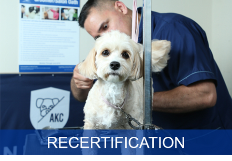 Safety in the Salon Recertification for Groomers (Individual)