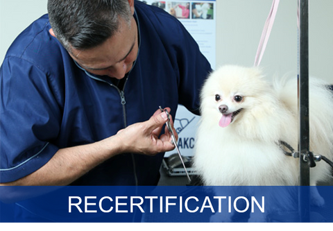 Safety in the Salon Recertification for Salons (Basic)