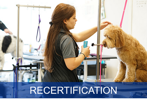 Safety in the Salon Recertification for Salons (Premium)