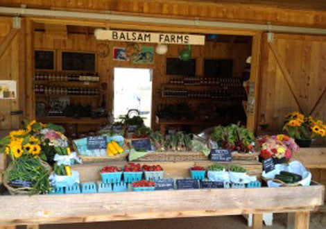 spend a summer day with us on balsam farms...