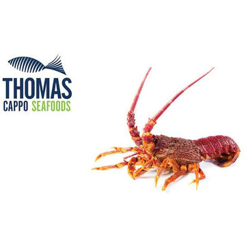 South Australian Crayfish (400 - 500g)