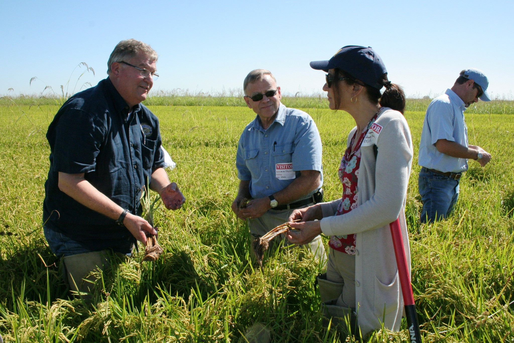 Governor to Tour Central Valley Rice Farms
