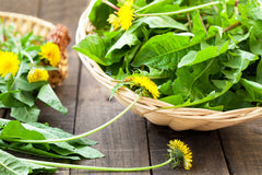 Benefits of Dandelion Leaves - More than Just a Weed