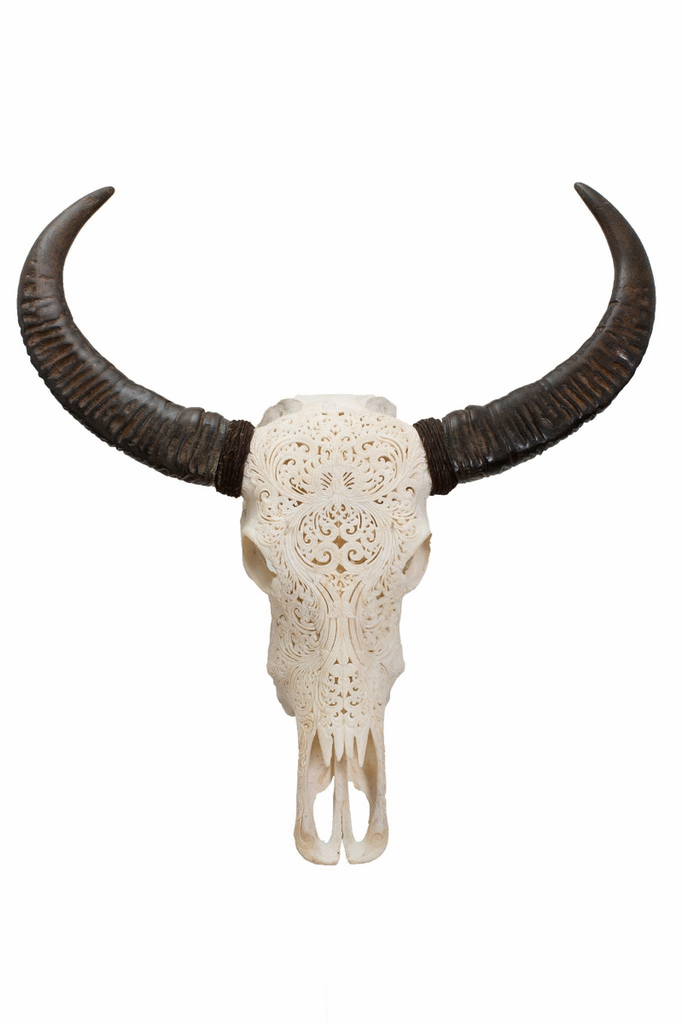 Hand Carved Real Water Buffalo Skull with Removable Horns