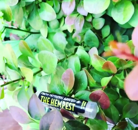 "The ""Hempish"" Lip Creme - From Mothers Garden"