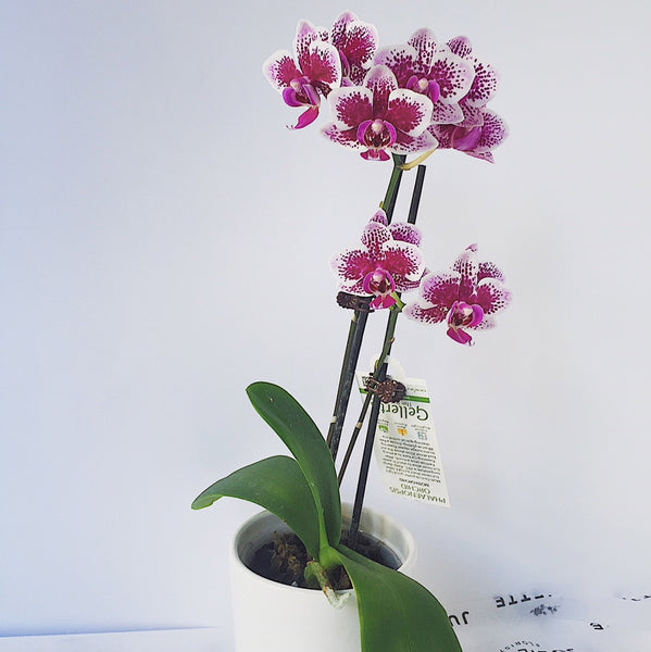 plant, orchid plant, hospital, gift