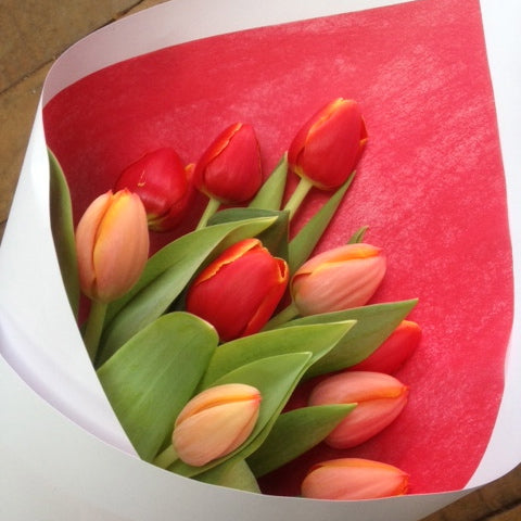 tulips, under $40 flowers, gift, wellington wide delivery