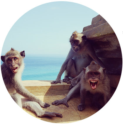 makers travelers bali monkeys angry mad