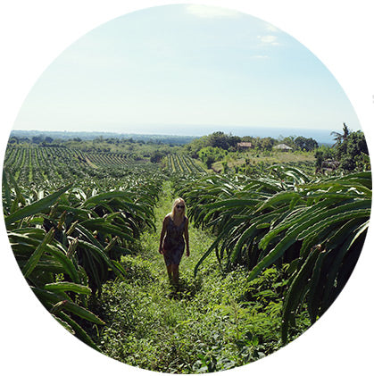makers travelers north bali bulian dragon fruit farm hikes farmland