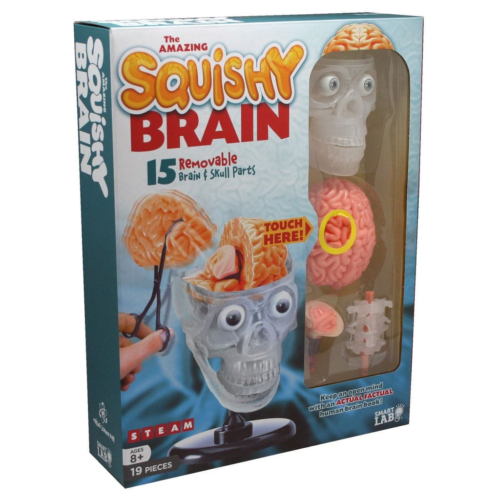 The Amazing Squishy Brain