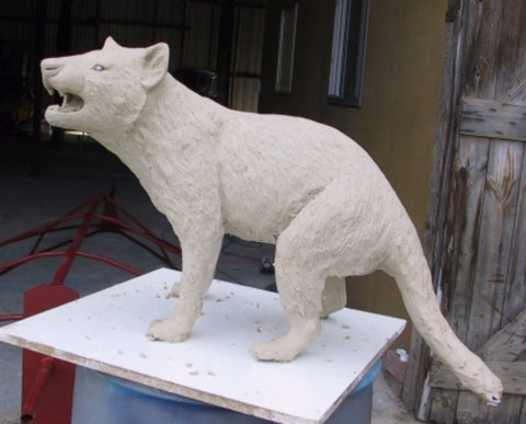 Before casting - Life size bronze sculpture of a Tasmanian Devil / Tassie Devil / tazmanian devil