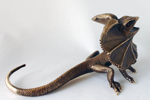 Bronze Frill neck Lizard