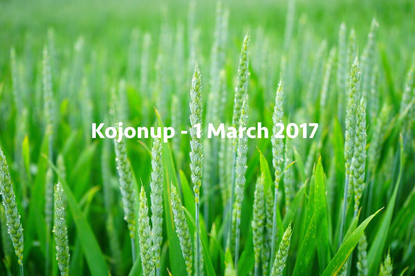 Soil Health plus Q&A - Kojonup