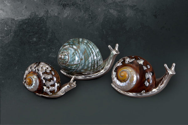 Snails-with Mother of Pearl - Barton,Son & Co.