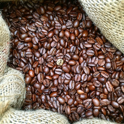 What You Need to Know About Bean to Cup Machines