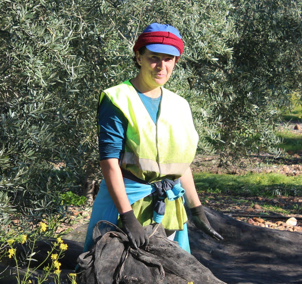 Attending the nets during a Spanish olive oil harvest, 2018
