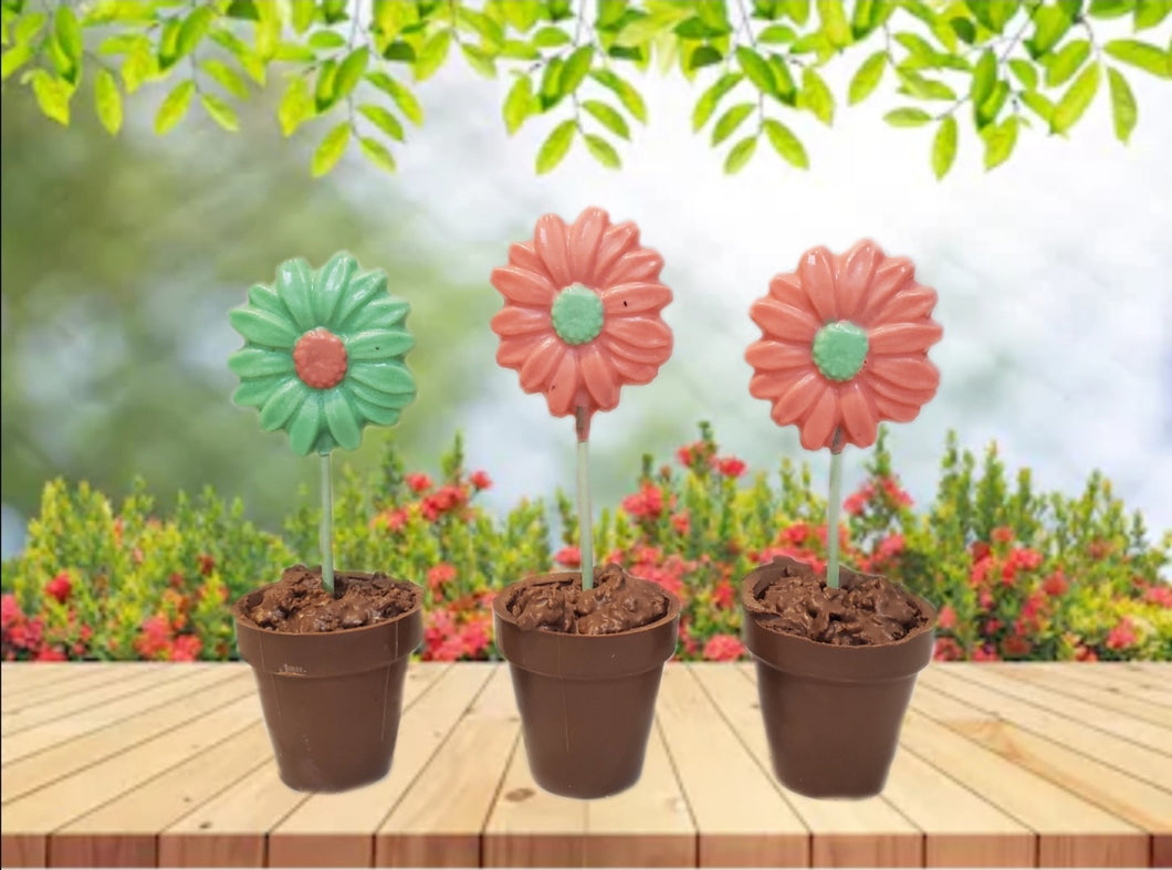 Chocolate Flower Pot